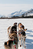 Musher's Perspective While Mushing Back To Base Camp On The North Fork Of The Koyukuk River In Gates Of The Arctic National Park & Preserve, Arctic Alaska, Winter