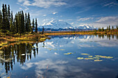 The North Face And Peak Of Mt. Mckinley Is Reflected In A Small Tundra Pond In Denali National Park, Alaska
