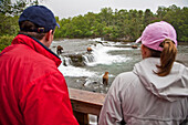 Visitors View Brown Bears Feeding On Sockeye Salmon, Katmai National Park, Southwest, Alaska