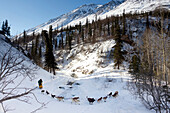 Matt Giblin Passes By The Open Water Of Dalzell Creek In The Notorius Dalzell Gorge Between Rainy Pass And Rohn During The 2011 Iditarod, Interior Alaska, Winter