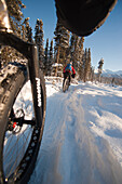 Low Angle Perspective View Of A Two People Riding Fatback Bicyles Trail Riding In Winter, Far North Bicentennial Park, Anchorage, Southcentral Alaska