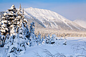 Winter Scenic Of Snowcovered Spruce Trees And The Chugach Mountains Near Girdwood In Southcentral Alaska