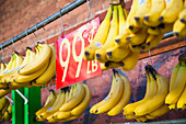 'Bananas hanging in a display rack for sale; Oahu, Hawaii, United States of America'