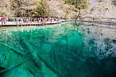 'The Crowd Of Tourists Is Taking Photos Of Jiuzhaigou Valley At The Edge Of A Deep Lake With Flooded Dead Trees; Jiuzhaigou, Sichuan, China'
