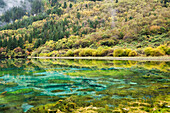 'Same Colors Of Autumn Forest And Underwater Vegetation In A Lake At Jiuzhaigou Valley National Park; Jiuzhaigou, Sichuan, China'