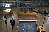 Museum, gallery of palaeontology and comparative anatomy, jardin des plantes, paris (75)