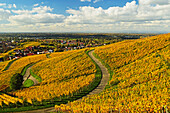 Vineyard landscape, Ortenau, Baden Wine Route, Baden-Wurttemberg, Germany, Europe