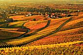 Vineyard landscape and Blumberg village, Ortenau, Baden Wine Route, Baden-Wurttemberg, Germany, Europe