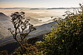 Misty sunrise view of mountains on the climb up Adam's Peak (Sri Pada) in the Central Highlands of Sri Lanka, Asia