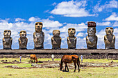 Horses grazing at the 15 moai restored ceremonial site of Ahu Tongariki on Easter Island (Isla de Pascua) (Rapa Nui), UNESCO World Heritage Site, Chile, South America