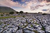 Limestone pavement and Ingleborough mountain, Ingleborough National Nature Reserve, Yorkshire Dales, North Yorkshire, England, United Kingdom, Europe