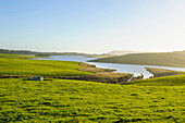 Little lake in green fields, the Catlins, South Island, New Zealand, Pacific