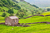 Field barn below Kisdon Hill near Angram in Swaledale, Yorkshire Dales, Yorkshire, England, United Kingdom, Europe