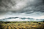 Rural crop fields under cloudy sky, Sayulita, Nayarit, Mexico