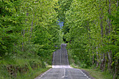 France, Gard (30), straight-lined road with bumps, trees, green vegetation