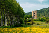 France. Aude. The tower of Arques in lush greenery. An avenue of trees on the left