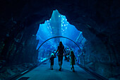 'Mother with boy and girl walking through tunnel in the massive aquarium in the Dubai Mall; Dubai, United Arab Emirates'