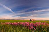 Rural Landscape, Alberta, Canada