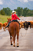 Young Cowboy On A Cattle Drive