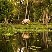 Animal Reflection, Kerala, India