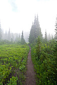 Trail In Morning Fog, Mount Rainier National Park, Washington, Usa
