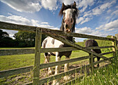 'North Yorkshire, England; Horses'
