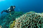 Sea Krait And Scuba Diver, Apo Island Marine Park, Philippines