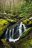 'Great Smoky Mountains National Park, United States Of America; Cascade And Moss Covered Rock In The Forest'