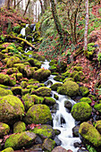 'Happy Valley, Oregon, United States Of America; Green Moss On The Rocks Along A Small Waterfall'