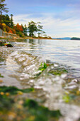 'Victoria, British Columbia, Canada; Water Along The Shoreline'