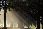 'Oregon Cascades, Oregon, United States Of America; Sun Shining Through The Morning Fog And Trees'