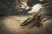'Alberta, Canada; Driftwood On The Beach'