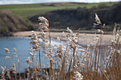 'Northumberland, England; Tall Grass Growing Along The Water'