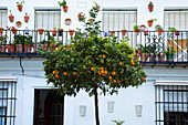 'Vejer De La Frontera, Andalusia, Spain; A Fruit Tree In Front Of A White House'