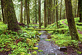 'A Trail And Stream Going Through Mount Hood National Forest; Oregon, Usa'