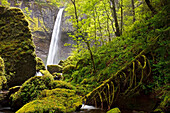 'A Waterfall In A Lush Forest; Oregon, Usa'