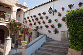 'Wall Of Potted Plants At Cathedral Of Our Lady Of The Assumption; Cordoba, Spain'