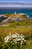 'Wildflowers And Yaquina Head Lighthouse; Oregon, United States Of America'