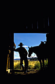 'Silhouette Of A Cowboy Holding His Horse's Reins And Looks Out Of The Barn As He Contemplates The Day; Seneca, Oregon, United States Of America'