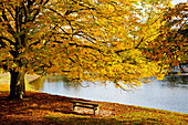 'A Large Tree And Bench Along The Water In Autumn; North Yorkshire, England'