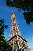 'Low Angle Of The Eiffel Tower Framed By Trees And A Blue Sky; Paris, France'
