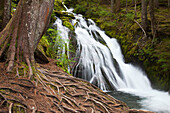 'A Waterfall At Still Creek In Mt. Hood National Forest In The Oregon Cascade Mountains; Oregon, United States Of America'