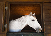 'A Horse Looking Out Of His Corral; Benalamadena Costa, Malaga, Costa Del Sol, Andalusia, Spain'
