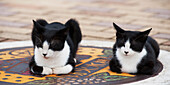 'Two Cats Sitting On A Decorative Stone On The Ground; Nagasaki, Japan'