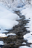 'Open Running Creek With Snow Covered Banks And Frost On The Trees; Lake Louise, Alberta, Canada'