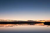 'Wading Birds In Water At Twilight At J. N. Ding Darling National Wildlife Refuge; Sanibel Island, Florida, Usa'
