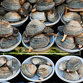 'Display Of Fresh Clams In Fish Market; Busan Korea'