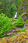 'Tanner Creek Falls In Columbia River Gorge National Scenic Area In The Pacific Northwest; Oregon, United States of America'