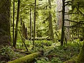 'Cathedral Grove; British Columbia, Canada'