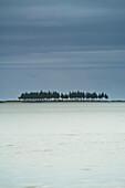 'A Row Of Trees Along The Coast; Farewell Spit, South Island, New Zealand'